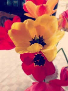 Tulips collected from our front garden is a reminder to be prayerfully present to our neighborhood.